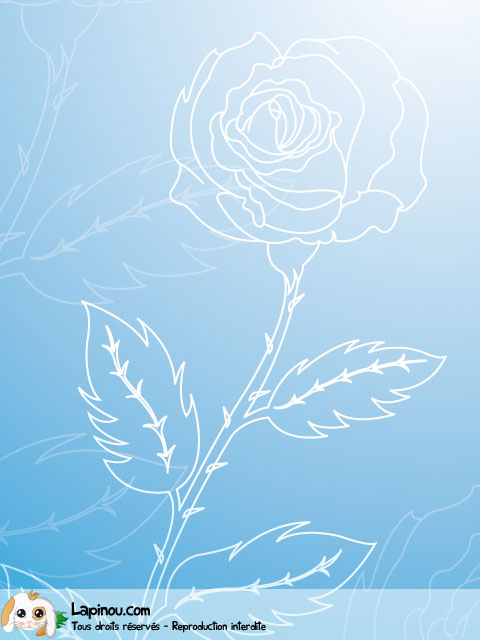 Rose transparente