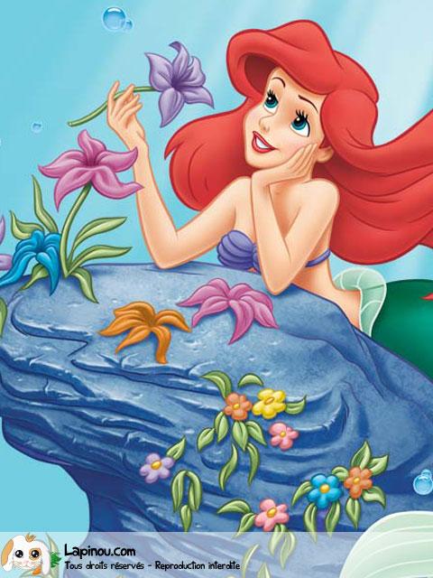 Ariel sur son rocher