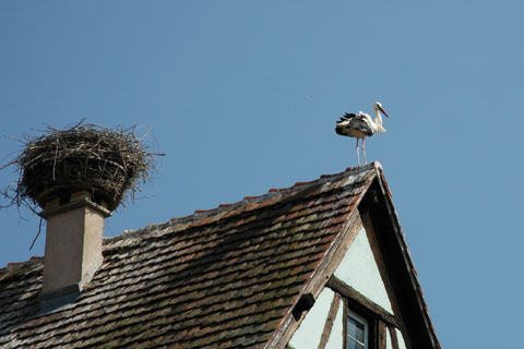 Cigogne sur un toit
