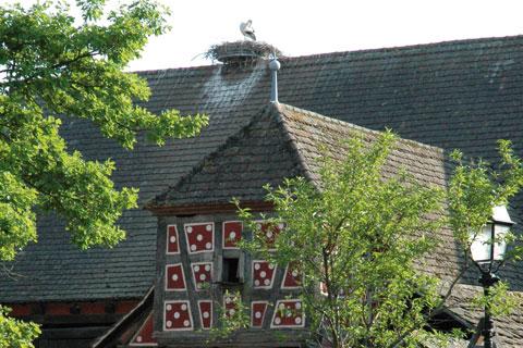 Maison alsacienne et cigogne