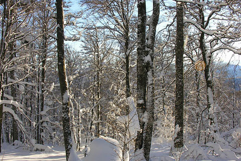 Arbres et tas de neige