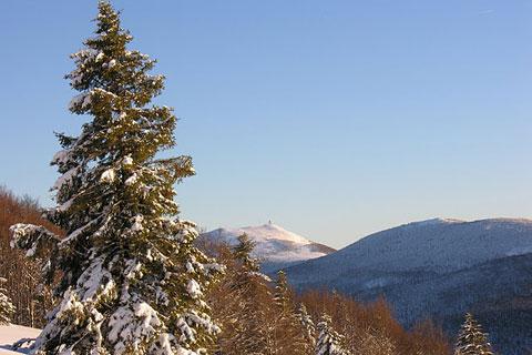 Sapin imposant sous la neige