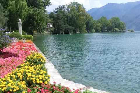 Fleurs sur le bord du lac