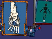 Création de squelette