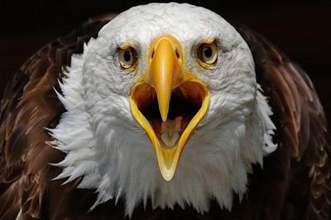 Quel est l'oiseau présent sur l'image ?