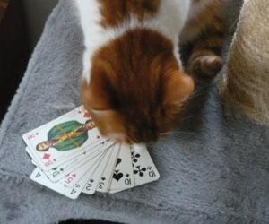 Noisette et ses cartes